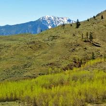 Grasslands Spring