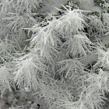 Frost Fingers