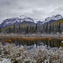 Winter Wetland