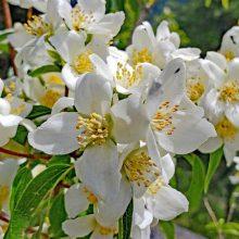 Nature's Perfume