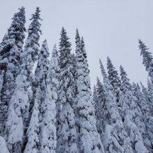 Snow Arrows
