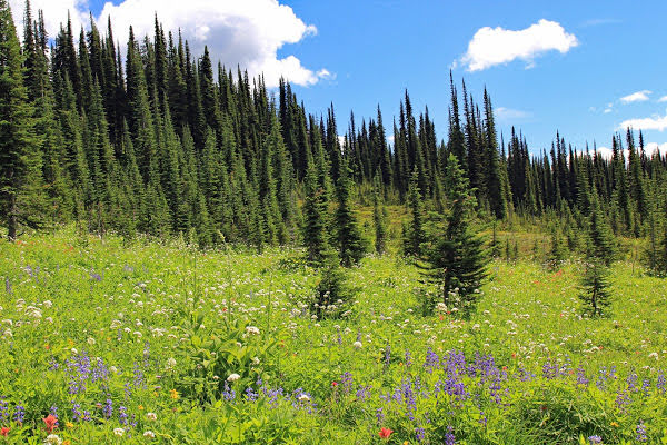 """<p>Eva Lake Trail, Mount Revelstoke National Park, BC</p><p class=""""lightbox-share""""><span>Share: </span><a class=""""lightbox-fb"""" href=""""javascript:void(0);"""">Facebook</a><a class=""""lightbox-twit"""" href=""""https://twitter.com/home?status=I%20voted%20for%20Subalpine%20Meadow%20in%20the%20Cornice%20Calendar%20Contest.%20Choose%20your%20favourite%206%20photos:%20http://ow.ly/yCSmZ"""" target=""""_blank"""">Twitter</a></p><input type=hidden class=voteid value=2022 />"""